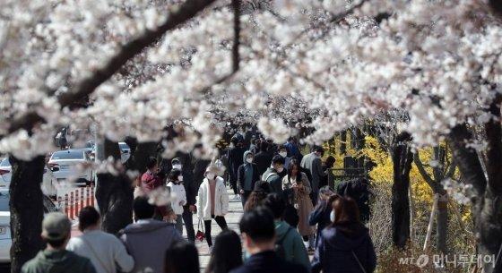 코로나19 확산 방지를 위해 사회적 거리두기 강화 기간인 29일 오후 서울 영등포구 여의도 윤중로에서 시민들이 벚꽃을 구경하고 있다. 영등포구는 내달 1일부터 국회의사당 뒤편 여의서로 차도를 통제, 2일부터는 보행로를 전면 통제한다. / 사진=김창현 기자 chmt@