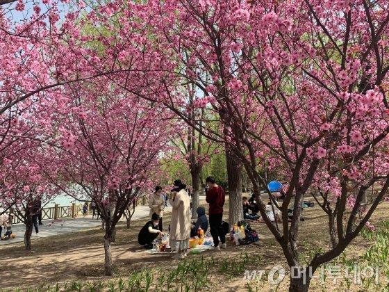 지난 4일 중국 베이징 올림픽삼림공원 잔디밭에 돗자리를 펴고 앉은 나들이객들./사진=김명룡 기자