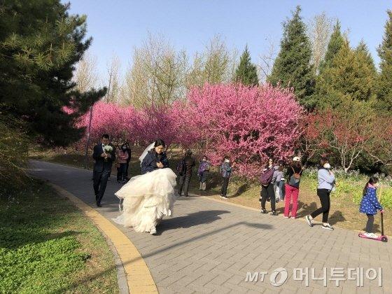 지난 4일 중국 베이징 올림픽삼림공원에서 예비부부가 웨딩촬영을 하고 있다./사진=김명룡 기자