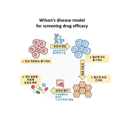 넥셀, 줄기세포를 이용한 신약 스크리닝용 윌슨병 모델 제작 성공