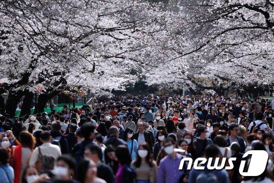 일본의 벚꽃 인파. © 로이터=뉴스1