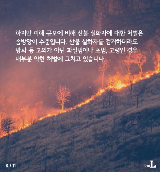 [카드뉴스] 또 '산불'에 큰 피해…너무 가벼운 처벌