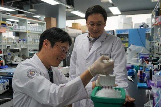 (우측부터) 주재열 선임연구원, 임기환 연구원이 알츠하이머병 환자의 혈액에 존재하는 유전자 증폭실험을 수행하고 있다/사진=한국뇌연구원