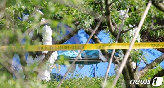 12일 전북 완주군 상관면 한 과수원에서 부산에서 실종된 것으로 추정되는 20대 여성의 시신이 발견돼 출동한 과학수사 관계자들이 시신을 옮기고 있다. /사진=뉴스1