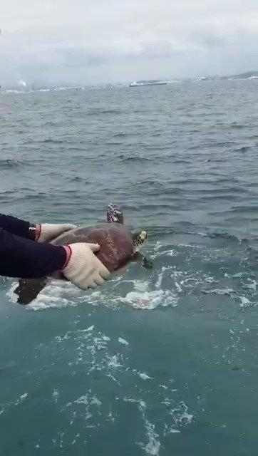거북이가 바다서 맘껏 뛰놀았으면 좋겠다, 당신의 작은 노력으로 인해./사진=해양환경공단 울산지사