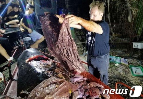필리핀 해역에 떠내려 온 새끼고래 사체에서 비닐봉지 40kg가 나왔다./사진=뉴스1