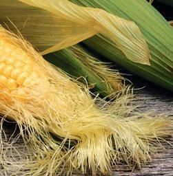 옥수수 수염/자료사진