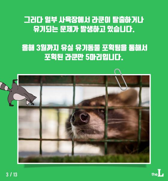 [카드뉴스] 유기된 '라쿤'이 생태계위협 한다는데…