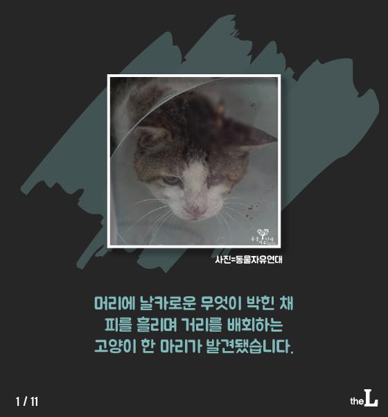 [카드뉴스] 화살 박힌 고양이…학대한 이유는