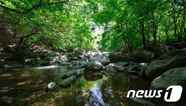 가평 어비계곡(경기관광공사 제공)/© 뉴스1