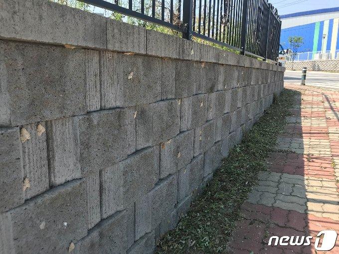 제천시 도심 담벽에 붙어 있는 매미나방.(제천시 제공)© 뉴스1