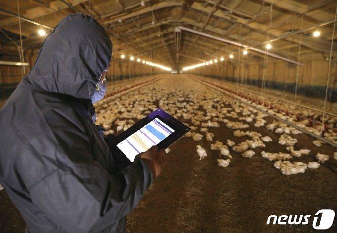 닭고기 전문기업인 ㈜하림 사육농가들이 장기 불황을 겪고 있는 닭고기 산업을 살리기 위해 닭고기 소비촉진 운동을 벌이기로 했다. 하림 사육농가의 사육장. /뉴스1