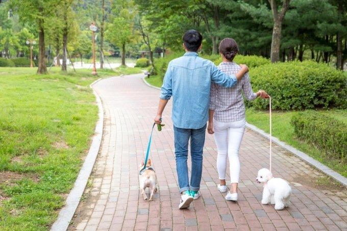 뜨거운 태양이 없는 아침이나 늦은 저녁 시간대 간단한 산책이 보양식만큼의 효과를 낼 수 있다./사진=이미지투데이