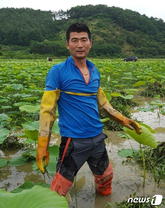 연근밭에서 일을 하고  있는 김성식 씨. © 뉴스1