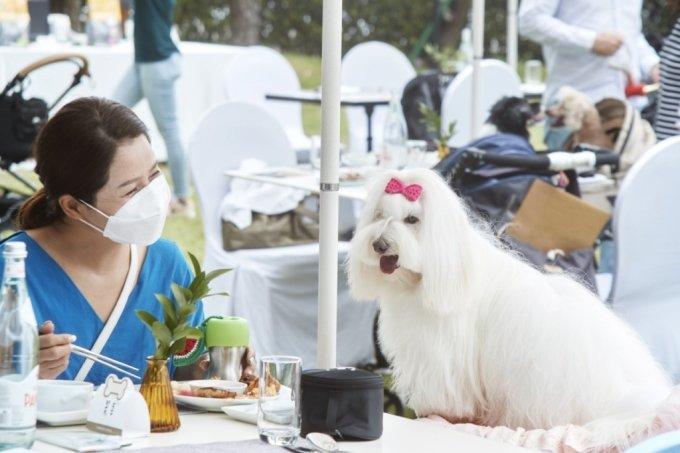 파라다이스 부산이 지난달 호텔 레스토랑 '온 더 플레이트'에서 진행한 반려견 뷔페가 인기를 끌었다. /사진=파라다이스부산