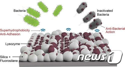 리소자임(lysozyme)에 의한 항균 효과와 초소수성 코팅(superhydrophobic coating)에 의한 방오 효과를 동시에 갖는 재료 표면의 모습.(단국대 제공)© News1