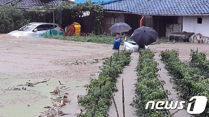 2일 새벽 시간당 최고 60㎜ 가까운 폭우가 내린 충북 봉양읍 한 도로에 빗물이 가득 차 침수피해가 발생하고 있다. (독자제공)2020.8.2/뉴스1