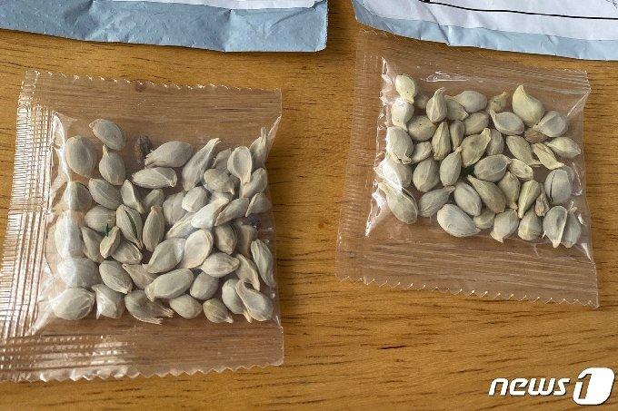미국으로 배달된 정체불명의 씨앗들 © 로이터=뉴스1