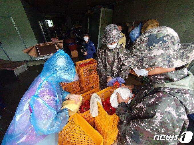 6일 오전 10시께까지 700㎜에 육박하는 누적 강수량을 보이는 가운데 5일부터 대피했던 철원군 김화읍 생창리에서 국군 장병들이 농가에서 생산한 파프리카를 하나씩 닦고 있다. © News1 황덕현 기자