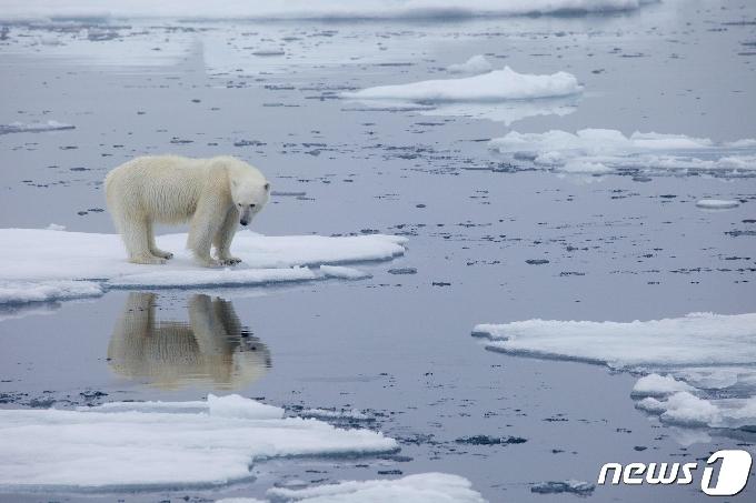 북극 7월 얼음면적 사상 최저…평균보다 27% 적어