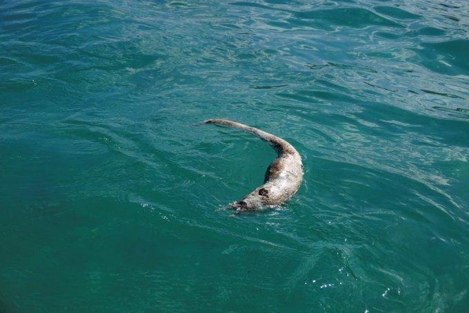 모리셔스의 바다 위에 죽은 바다장어가 떠 있다. /사진=로이터