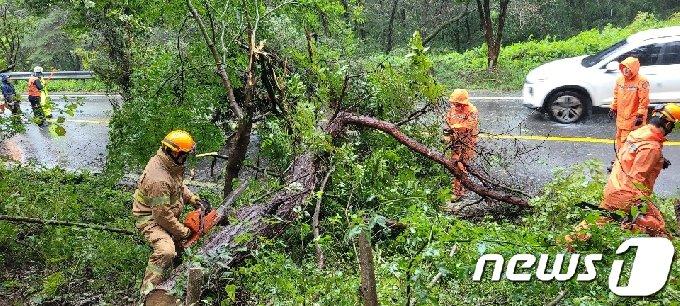 7일 오전 7시35분쯤 전남 함평군 해보면 한 도로에서 강풍에 나무가 쓰러져 소방당국이 나무 제거 작업을 벌이고 있다.(전남소방본부 제공)2020.9.7 /뉴스1 © News1