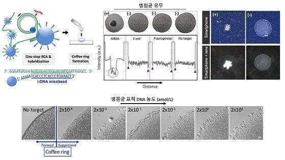그림 1. 커피링 등온 유전자 검출법의 모식도 및 항생제 내성 병원균 분석 결과(상단 왼쪽) 커피링 등온 유전자 검출법의 모식도. (상단 가운데) 병원균 종류에 따라 형성된 커피링 패턴의 음영 값을 나타낸 히스토그램. (상단 오른쪽) 검출 결과를 렌즈가 장착되지 않은 (위), 그리고 렌즈가 장착된 (아래) 스마트폰 카메라로 캡쳐한 이미지. (하단) 병원균 유전자물질 농도에 따른 커피링 등온 유전자 검출법의 결과. 젭토몰 농도 이하 (~ 0.2 zM)에서도 높은 민감도로 검출이 가능함을 보임/사진=KAIST