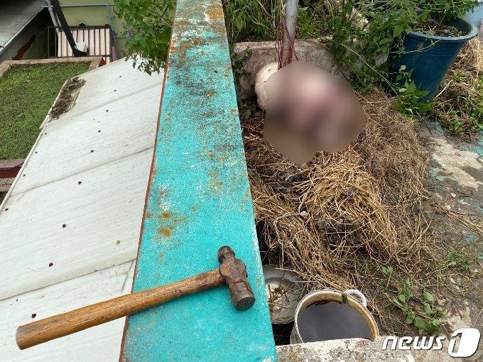 범행에 사용된 망치.(동물보호단체 라이프 제공)© 뉴스1