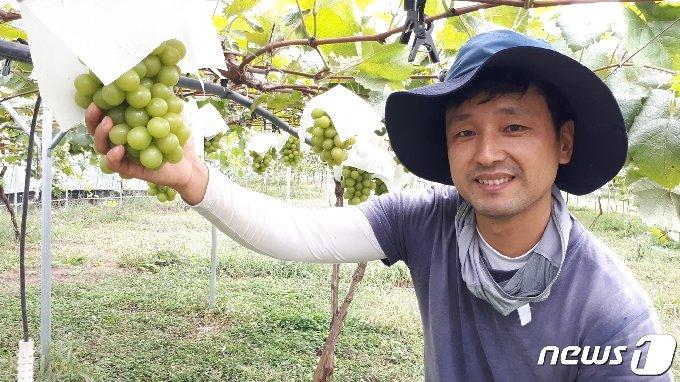 10년 전 충북 옥천으로 귀농한 이대겸씨가 포도를 살피고 있다. © 뉴스1
