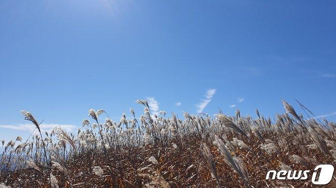 25일 전북 장수군 장안산의 억새 군락지와 파란 하늘이 가을 풍경을 이루고 있다. 2020.10.25/뉴스1 © News1 이지선 기자