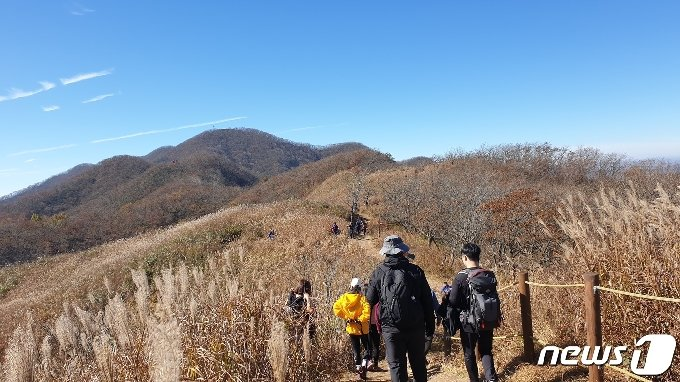 25일 전북 장수군 장안산을 찾은 관광객들이 억새 군락지를 걷고 있다. 2020.10.25/뉴스1 © News1 이지선 기자