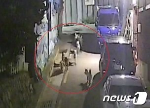 CCTV에 포착된 들개무리.(독자 제공)© 뉴스1