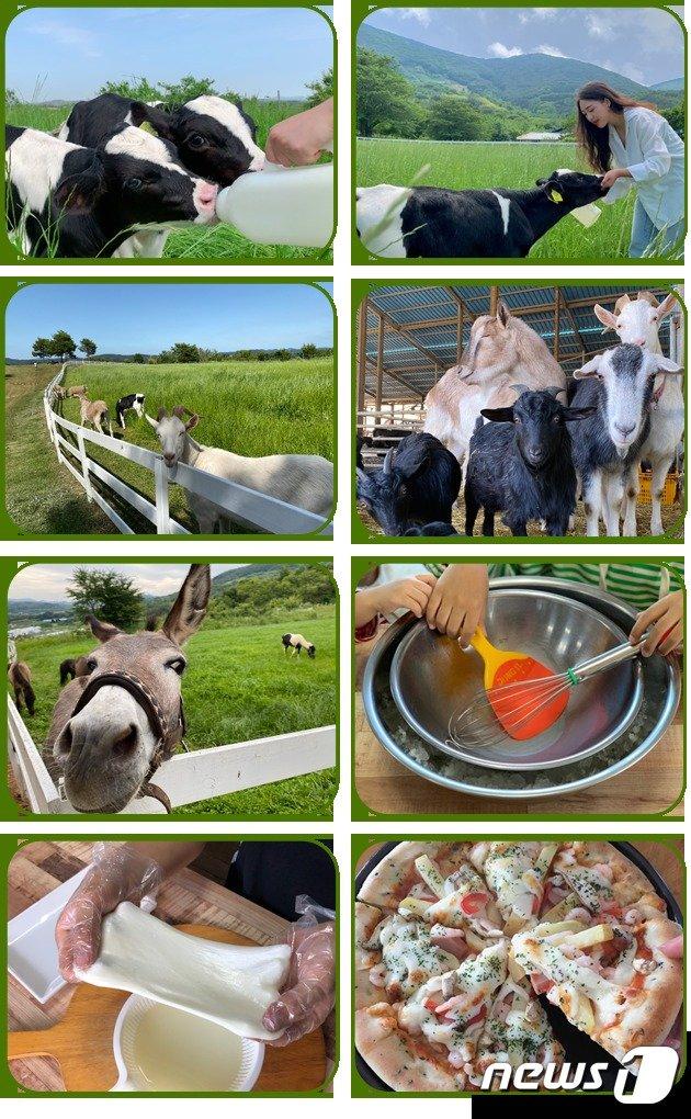 해뜰목장 동물들과 체험프로그램. © 뉴스1