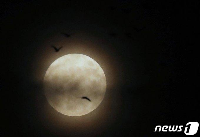 핼러윈데이(Halloweenday)인 31일 오후 울산 태화강 상공에서 19년 만에 뜬 '핼러윈 블루문' 주위로 떼까마귀가 비행하고 있다. 블루문은 한 달에 두번째 뜨는 보름달, 핼러윈 블루문은 핼러윈데이인 이날에 뜨는 블루문을 말한다. 블루문은 평균적으로 2년 8개월마다, 그중 핼러윈데이 때 블루문이 관측되는 건 19년마다 일어난다. 다음 핼러윈 블루문이 뜨는 날은 2039년 10월 31일이 된다./사진= 뉴스1