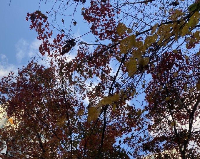 당연하게 여겼던 파란 하늘, 가을 단풍잎이 어느 순간 사라진다면./사진=남형도 기자