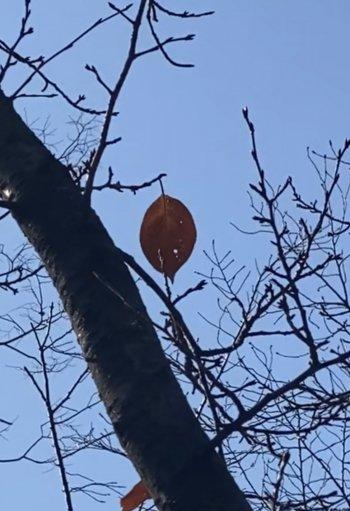 홀로 매달려 있는 나뭇잎. 언제 떨어질지 아무도 알 수 없는 삶이란./사진=남형도 기자