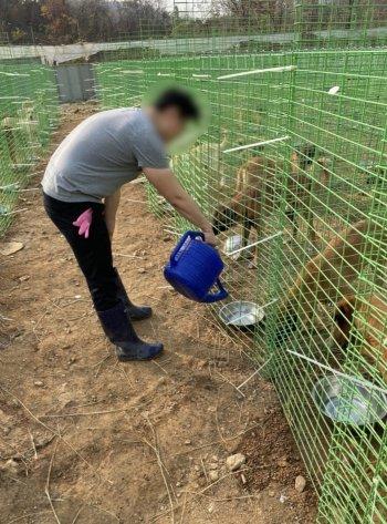 개들에게 물 주는 기자. '많이 목 말랐지, 물 먹자.'/사진=계양산 개들을 돌보는 대학생들.