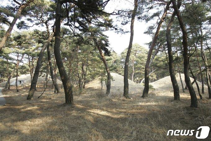 동명왕릉 뒤쪽에 있는 '진파리 고분군'. 북한에서는 '동명왕릉고분군'이라고 한다. 현재 10여기가 남아 있다. (미디어한국학 제공) 2020.11.21.© 뉴스1
