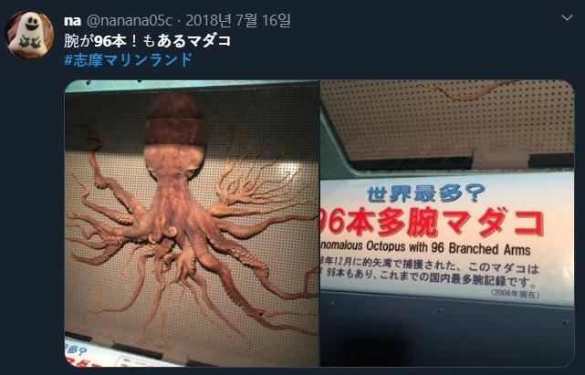 일본 시마 마린랜드에 보관돼 있는 다리가 96개인 참문어 /사진=트위터