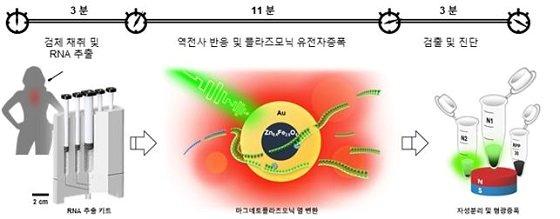 nanoPCR를 사용하여 17분 안에 코로나 바이러스를 진단하는 과정 본 연구에서 개발한 코로나 바이러스 RNA 추출키트를 통해 RNA를 추출한 뒤,MPN을 사용하여 초고속 온도 상승/강하를 11분간 구현하여 코로나바이러스의 유전자를 증폭하도록 하였다. 증폭된 유전자의 검출을 위하여 외부자기장에 의해 나노물질이 스스로 분리되어 유전물질의 형광신호를 증폭하게 된다/사진=IBS