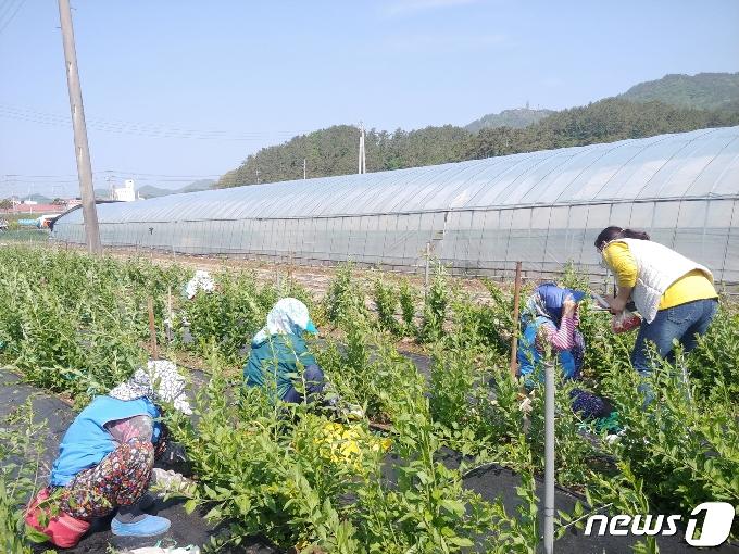 전남도, 18일까지 '노인일자리사업' 참여자 모집