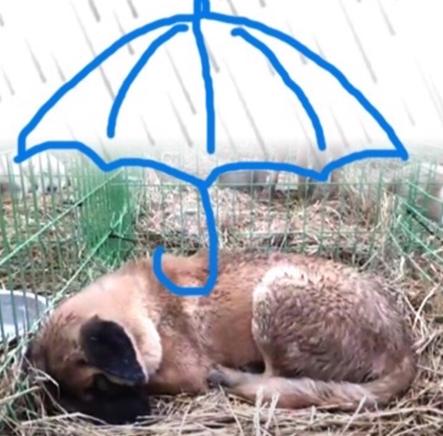 비가 많이 온 날, 비를 맞고 축 늘어져 있던 계양산 시민 보호소의 한 아이. 우산이 되어줬으면 하는 바람으로 봉사자 중 누군가 그렸다./사진=롯데목장 개살리기 시민모임