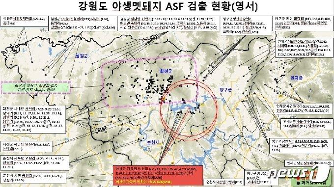 강원지역 야생멧돼지 ASF 검출현황(강원도 제공)© 뉴스1