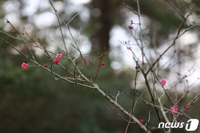 [사진] 성큼 다가온 봄의 기운