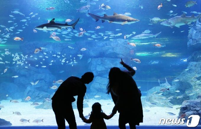 [사진] '바다 세상에 들어왔어요'