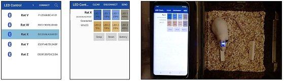 무선 제어용 스마트폰 앱. (좌) 연결 가능한 디바이스 선택 화면. (중) 배터리 잔량 확인 및 마이크로 LED 제어 화면. (우) 스마트폰 앱을 이용한 완전이식된 디바이스의 마이크로 LED 제어/사진=KAIST