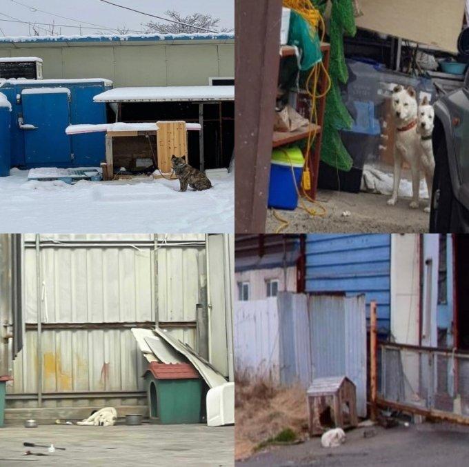 전국 곳곳에서 짧은 줄에 묶인 채 '1m의 삶'을 매일 살아내는 개들. 불법도 아닌 사각지대에서 그 지루한 나날을 견디고 있다./사진=독자님들 제공