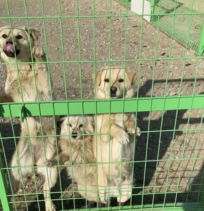 가족에게 버려진 존재들, 개들마저 품어준 소망의 집. 사람을 이리 좋아한다. 내게 웃어주는 것조차 너무 미안하다./사진=남형도 기자