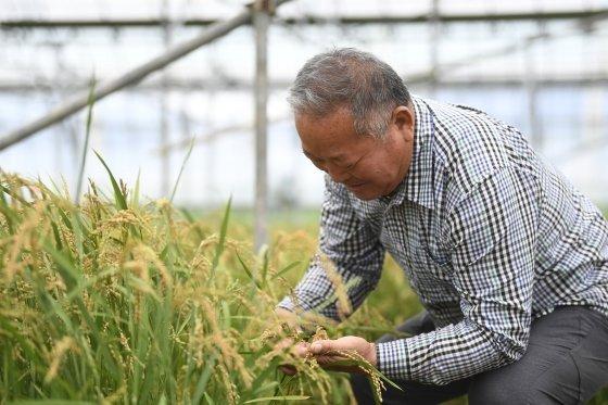 ▲여주 쌀 재배하는 농민/사진=여주시청 제공