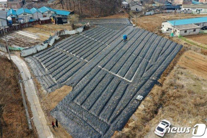 사진은 LH 직원들이 사들인 것으로 알려진 경기도 시흥시 과림동 소재 농지의 지난 3일 모습./사진=뉴스1